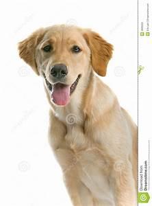 stock photos panting dog image