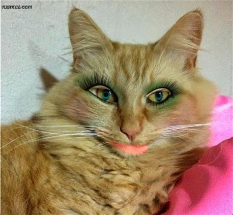 cats wearing lipstick fun farrago