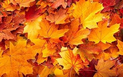 Fall Leaves Autumn Arts Movies Theater Guide