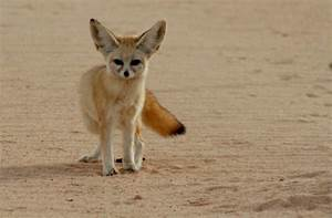 Biome #1: Desert ( Saharan Desert) - ThingLink