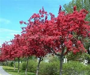 Petit Arbre Persistant : arbres ~ Melissatoandfro.com Idées de Décoration