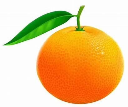 Orange Clipart Vector Fruit Ornage Clip Cliparts