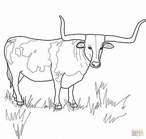 Texas Longhorn Steer Coloring Page Free Printable