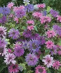 shade perennials zone 7 Best 25+ Full Sun Perennials ideas on Pinterest | Full sun ...