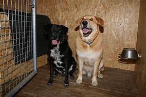 Hund Im Haus : urlaub mit hund im hundehotel bayerischer wald ~ Lizthompson.info Haus und Dekorationen