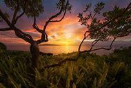 Famous Landscape Photography