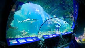 sea aquarium punti di interesse a monaco di baviera con expedia it