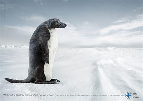 imagenes graciosas de publicidad  perros frogx