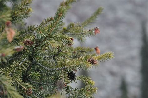 what is theprices of christmas trees at wildwood farm in auburntown tn how much will cost the tree novinite sofia news agency