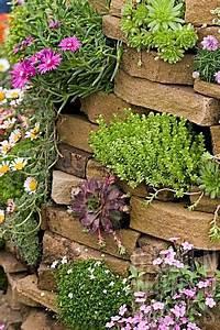 Blumen Für Steingarten : steingarten mauer kakteen blumen bl hpflanzen sch ner steingarten pinterest kaktus ~ Markanthonyermac.com Haus und Dekorationen