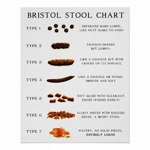 Stool Chart Poster Zazzle