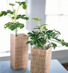 Pflanzen Die Wenig Wasser Brauchen : zimmerpflanzen die wenig licht brauchen ~ Frokenaadalensverden.com Haus und Dekorationen