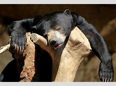 Sehr müde und lustige Tiere Bilder tiere pictures