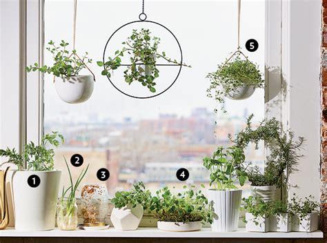 windowsill plants garden grow vegetable sage farming edible greens windy reed styling jason courtesy