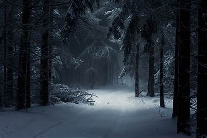 Forest Winter Snow Path Backgrounds Wallpapers Desktop