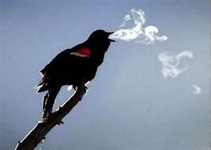 bird optical illusion