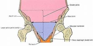 Pictures Of Cavity Of The Lesser Pelvis