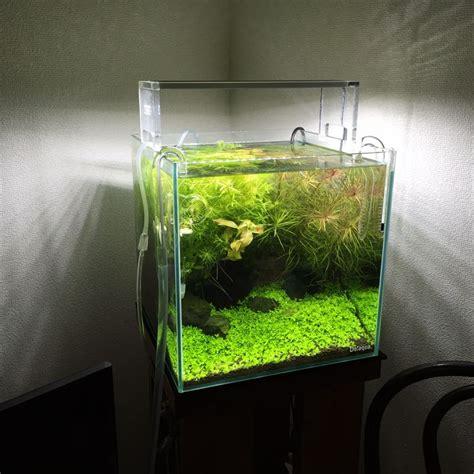 Cube Aquarium Aquascape by 30cm Cube 30x30x30 Aquascape Discus Aquarium