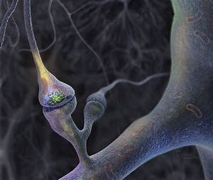Human Neuron HD Wallpaper : 5 Brains Synapse Neurons ...