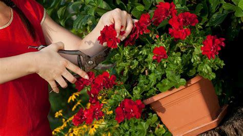 Die Besten Balkonpflanzen by Die Besten Beet Und Balkonpflanzen Des Jahres 2016