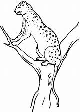 Cheetah Coloring Printable Pages Animal Tree Under Realistic Toddlers Concepts Worksheet Animals Bestcoloringpagesforkids Line Worksheets Drawing Colors Kindergarten Coloringpages101 Guide sketch template