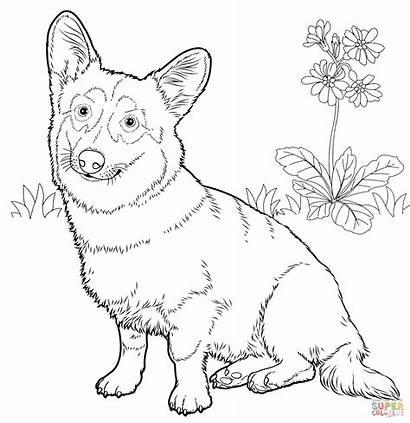 Corgi Coloring Welsh Pembroke Kleurplaat Dog Printable