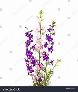 Wild Flowers Isolated On White Background Stock Photo ...