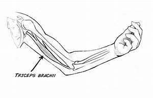 Flexion And Extension  Record Your Antagonistic Muscles