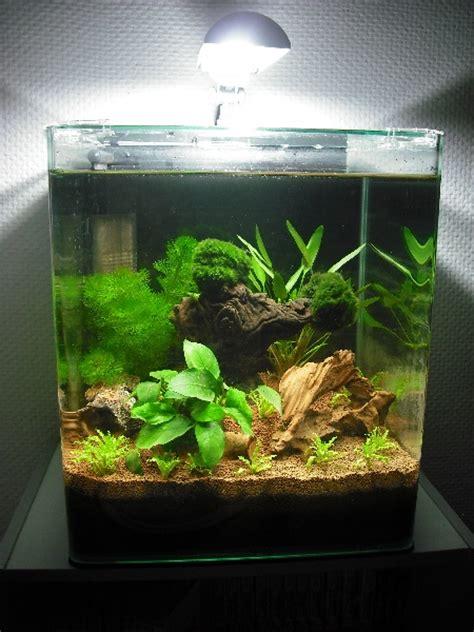 nano 30 litres pour crevettes