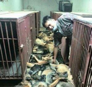 horror pic exposes dog slaughter  kuwait wnd
