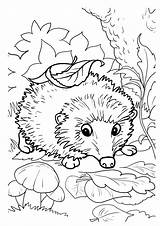 Coloring Hedgehogs Hedgehog Pages Printable Activity Funny Fall sketch template