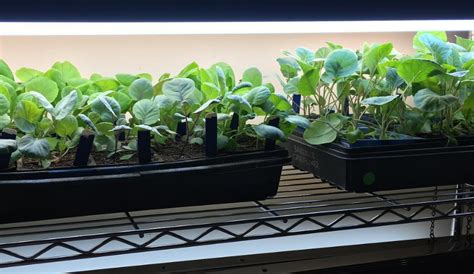 grow light setup want to garden like a pro here s a simple and affordable