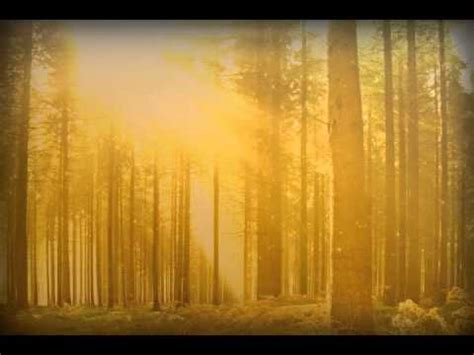 Fall Backgrounds Powerpoint by Fall Forest Trees Powerpoint Background