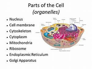 Cells Part 2  Cell Structures