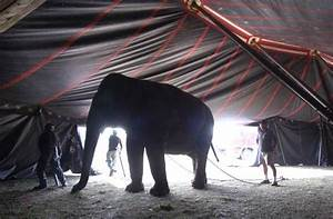 Will, The, Show, Go, On, After, Illinois, Bans, Circus, Elephants