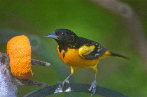 how to get the birds to pick the feeder in your yard