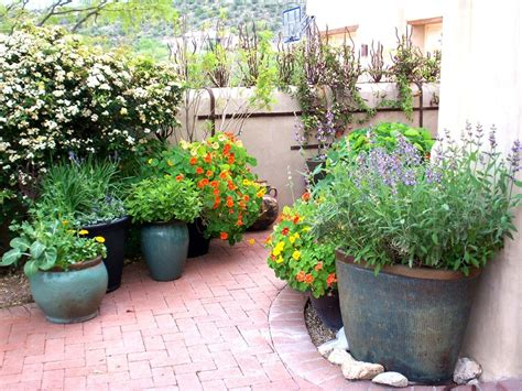 potted trees for patio let s all get potted even in your desert landscape the 4373