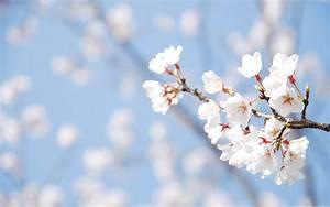 Spring Flowers Wallpaper 1403 2560 x 1600