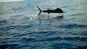 Costa Rica Fishing Trip Story from a Vacationers Point of View
