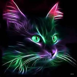 157 best images about Neon Animals on Pinterest