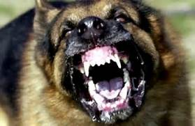 Rabies In Animals Images & Pictures - Becuo