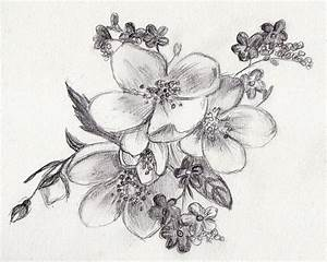 Easy Sketches Of Flowers   Rainbow Smudge   SKETCHES ...
