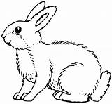 Rabbit Coloring Pages Bunny Animals Colouring Printable Drawing Animal Drawings Wild sketch template