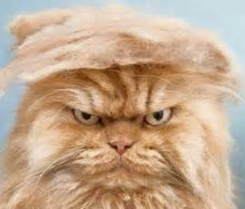 Cats That Look Like Donald Trump