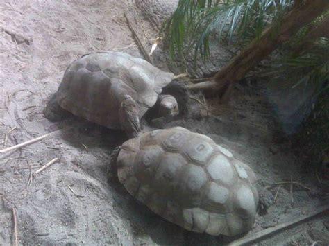 turtle zoo jersey orange west essex county sunday turtles am