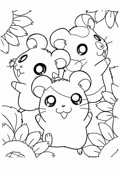 Hamsters Kleurplaten Dieren Kleurplaat Animaatjes