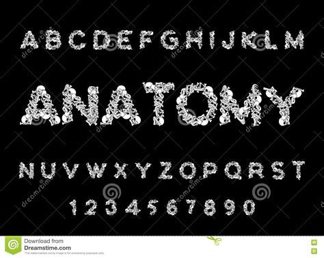 Anatomy Bones Royalty-free Stock Photography