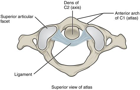anatomy  selected synovial joints voer