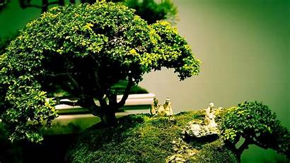 Cool Wallpapers Desktop Bonsai
