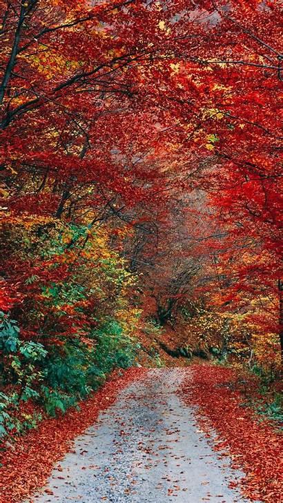 Foliage Trail Autumn Nature